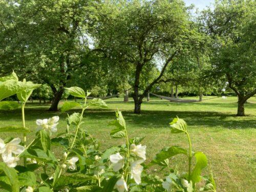 Rågegården og den gamle have