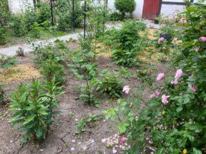 Det nye bær-bed i gårdhaven